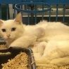 助けて下さい!保健所収容後 出産 親子猫