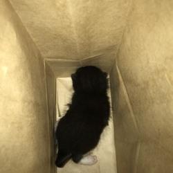 捨て猫それは犯罪です!
