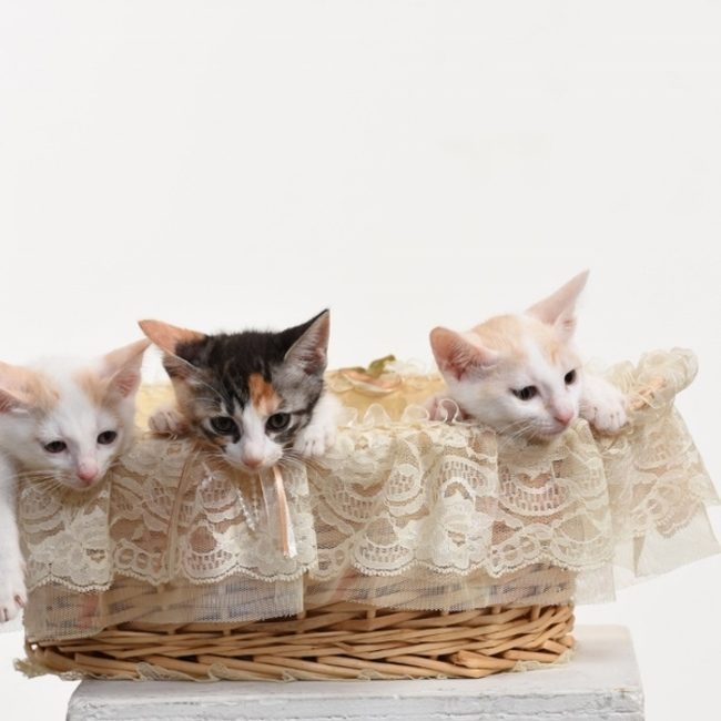 NPO法人いたみ野良猫をふやさない会みゅうみゅうのカバー写真