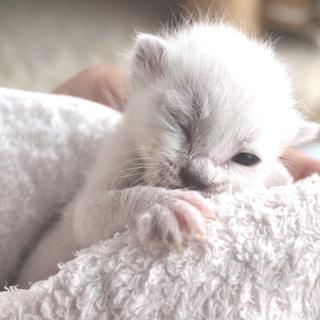 ダムに捨てられた赤ちゃん猫 ななちゃん