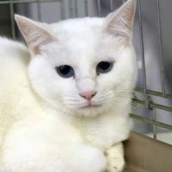 名古屋市西区円頓寺 5月13日(日)第79回リトルパウエイド猫の譲渡会 サムネイル1