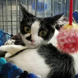 名古屋市西区円頓寺 5月13日(日)第79回リトルパウエイド猫の譲渡会 サムネイル2