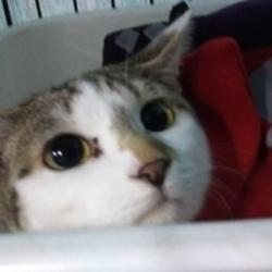 名古屋市西区円頓寺 5月13日(日)第79回リトルパウエイド猫の譲渡会 サムネイル3