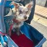 引退犬 シュナウザ一有り難うございました‼︎