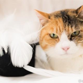 大人しくて可愛い 三毛猫のリイちゃん ♪