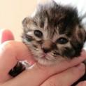 4月20日生まれ!元気な子猫「進くん」
