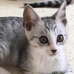 保護猫里親会@東京ドームシティ