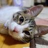 5/13銀座★あずきちゃん★お墨付きのおてんば娘 サムネイル2