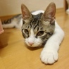 5/13銀座★あずきちゃん★お墨付きのおてんば娘 サムネイル4