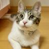 5/13銀座★あずきちゃん★お墨付きのおてんば娘 サムネイル5