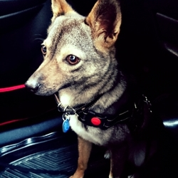 保護犬への考え方