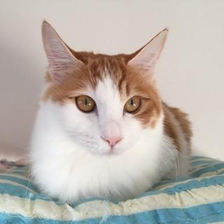 美人猫ちゃん