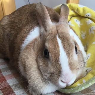 ウサギちゃんの里新さん募集
