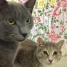 [トライアル中]飼い主入院で置き去りにされた猫達 サムネイル7