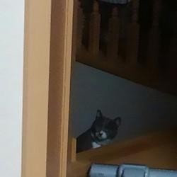 ご飯をペロリ!&二階にやってきた!