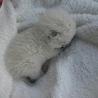 生まれたばかりの子猫です