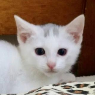 白猫王子1号、イケニャンのメイ❗️