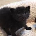 4月20日生まれ!元気な子猫「圭ちゃん」