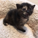 4月20日生まれ!元気な子猫「駒ちゃん」