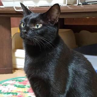 【ジェット】ツヤピカ黒猫男子!