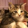 史上最強懐っこい美猫ママと5匹の子猫
