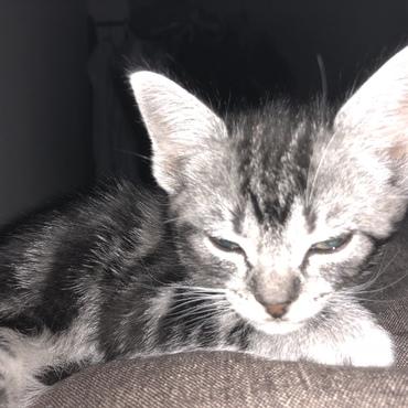 寝てるところ写真に撮られた不機嫌そうな顔