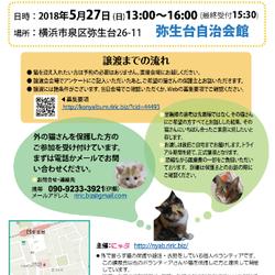 ♥横浜市泉区でねこの譲渡会♥第6回5月27日(日)