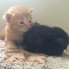 生後2週間 人懐っこい子猫