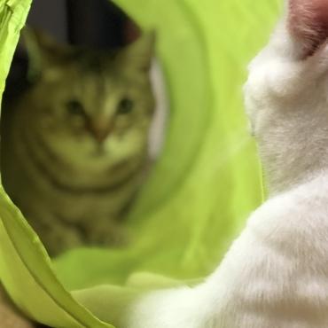 トンネルでお見合い。ぬお!