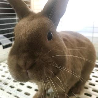 ウサギの里親さん決まりました!