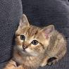 保護猫の里親様を探しています。