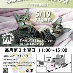 第66回保護猫たちの幸せ探し会