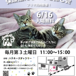 第67回保護猫たちの幸せ探し会