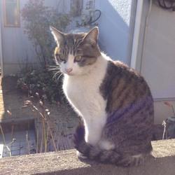 迷子猫見ていませんかサムネイル