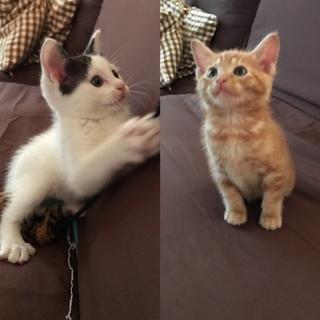 可愛い兄妹仔猫