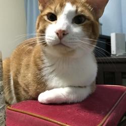 迷い猫です。見ていませんか?サムネイル
