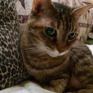 とても素直で可愛いメス猫です