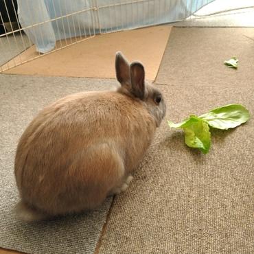 サラダ菜好き