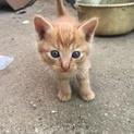 保護の子猫 5匹の兄弟