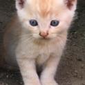 保護子猫  5匹兄弟   ①