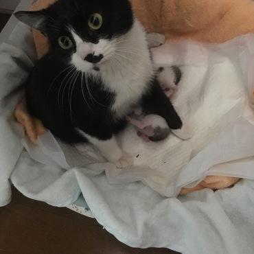 18.4.25撮影  18.4.21生まれの子猫2匹と母猫