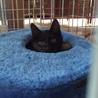 おめめクリクリの黒子猫 サムネイル2