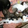 3月18日生まれの子猫3匹です♪