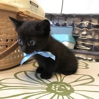 物置で産まれた兄弟猫 大人しくて可憐なリク君!