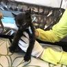 物置で産まれた兄弟猫 大人しくて可憐なリク君! サムネイル2