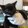 物置で産まれた兄弟猫 大人しくて可憐なリク君! サムネイル4