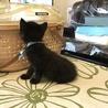 物置で産まれた兄弟猫 大人しくて可憐なリク君! サムネイル5