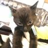 物置で産まれた兄弟猫 大人しくて可憐なリク君! サムネイル6