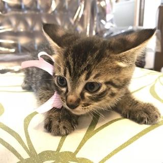 物置で産まれた兄弟猫 賢くて活発なリッキー!