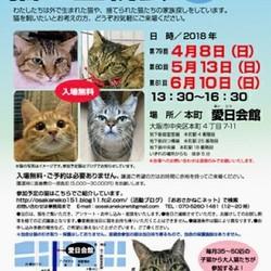 第81回 NPO法人おおさかねこネット 猫の里親会